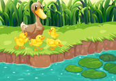 A mother duck with her ducklings at the river — Stock Vector