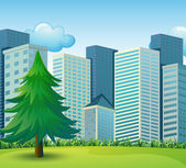 A big pine tree growing near the tall buildings — Stock Vector