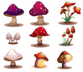 Different kinds of mushrooms — Stock Vector