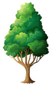 A tall old tree — Stock Vector