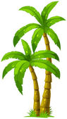 Two palm trees — Stock Vector
