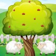 Sheeps inside the fence near the apple tree — Stock Vector #35713375