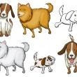 Stock Vector: Different specie of dogs