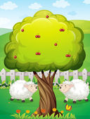 Sheeps inside the fence near the apple tree — Stock Vector