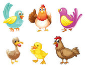 Different kind of birds — Stock Vector