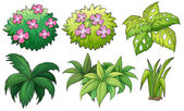 Six ornamental plants — Stock Vector