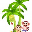 Two monkeys under the banana plants — Stock Vector
