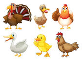 Six different birds — Stock Vector
