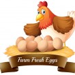 Fresh eggs from the farm — Stock Vector