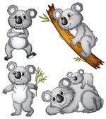 A group of koalas — Stock Vector
