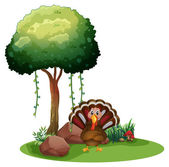 A turkey near the rocks under the tree — Stock Vector