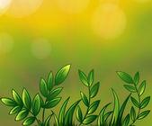 Leafy plants — Stock Vector