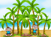 A beach with tall coconut trees and playful monkeys — Stock Vector