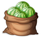 A sack of fresh watermelons — Stock Vector