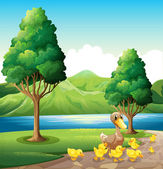 A family of duck at the riverbank — Stock Vector