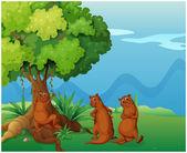 Three playful wild animals near the big old tree — Stock Vector