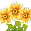 Blooming sunflowers — Stock Vector