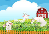 A farm with three goats — Stock Vector