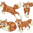 Four foxes — Stock Vector #43064399