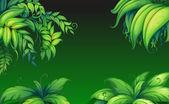 Green leafy plants — Stock Vector