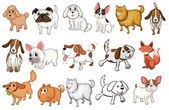 Different breeds of dogs — Stock Vector