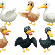 Ducks and geese — Stock Vector #43274969