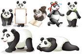 Seven pandas — Stock Vector