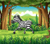 A zebra at the jungle — Stock Vector