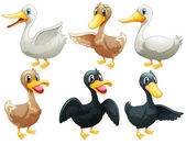 Ducks and geese — Stock Vector
