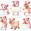 Pigs with empty signboards — Stock Vector #43545971