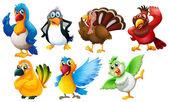 Different species of birds — Stock Vector