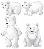 Four white polar bears — Stock Vector