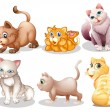 Playful cats — Stock Vector #44006489