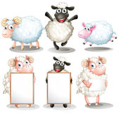 Sheeps and lambs with empty boards — Stock Vector