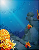 The corals near the rocks and the school of fish — Stock Vector