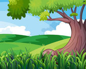 A big tree at the hills — Stock Vector