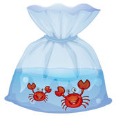 Crabs inside the plastic — Stock Vector