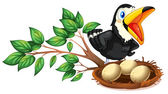 A black bird watching the nest with eggs — Stock Vector