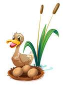 A brown duck near the nest — Stock Vector