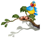 A parrot watching the eggs in the nest — Stock Vector