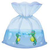 Seahorses inside the plastic pouch — Stock Vector
