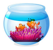 An aquarium with two orange fishes — Stock Vector