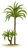 A palm tree — Stock Vector