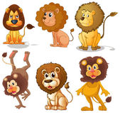 Lions — Stockvektor