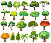 木のセット — ストックベクタ