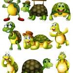 Постер, плакат: Turtle actions