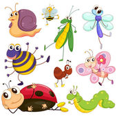 Different insects — Stock Vector