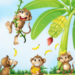 Playful monkeys near the banana plant — Stock Vector #51681205