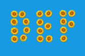 Floral alphabet made from flowers of sunflower. — Stock Photo