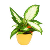House plant in a yellow pot — Stock Photo